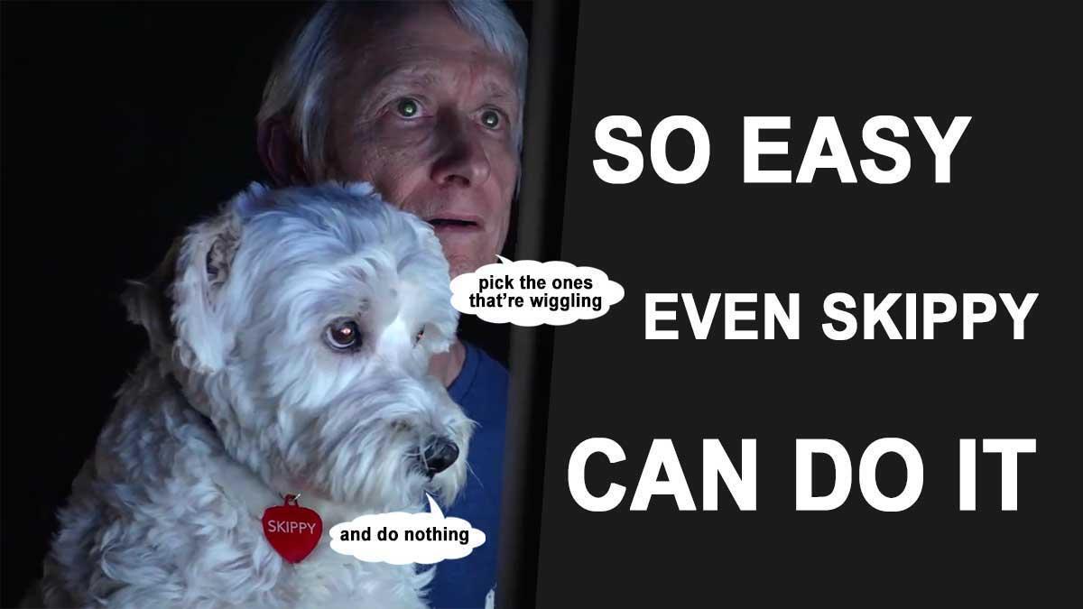 Dan Hollings Crypto
